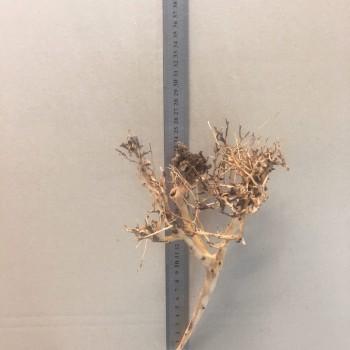Коряга паутина шарлотты 9