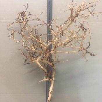 Коряга паутина шарлотты 2