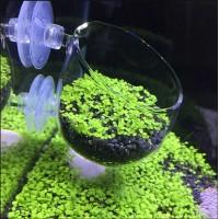 Стеклянное кашпо для аквариумных растений
