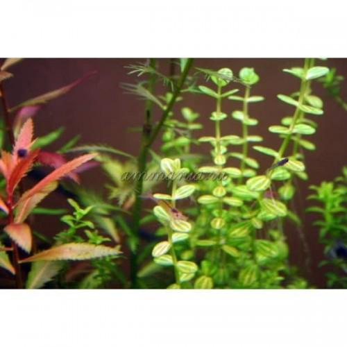 Набор длинностебельных растений 10 видов