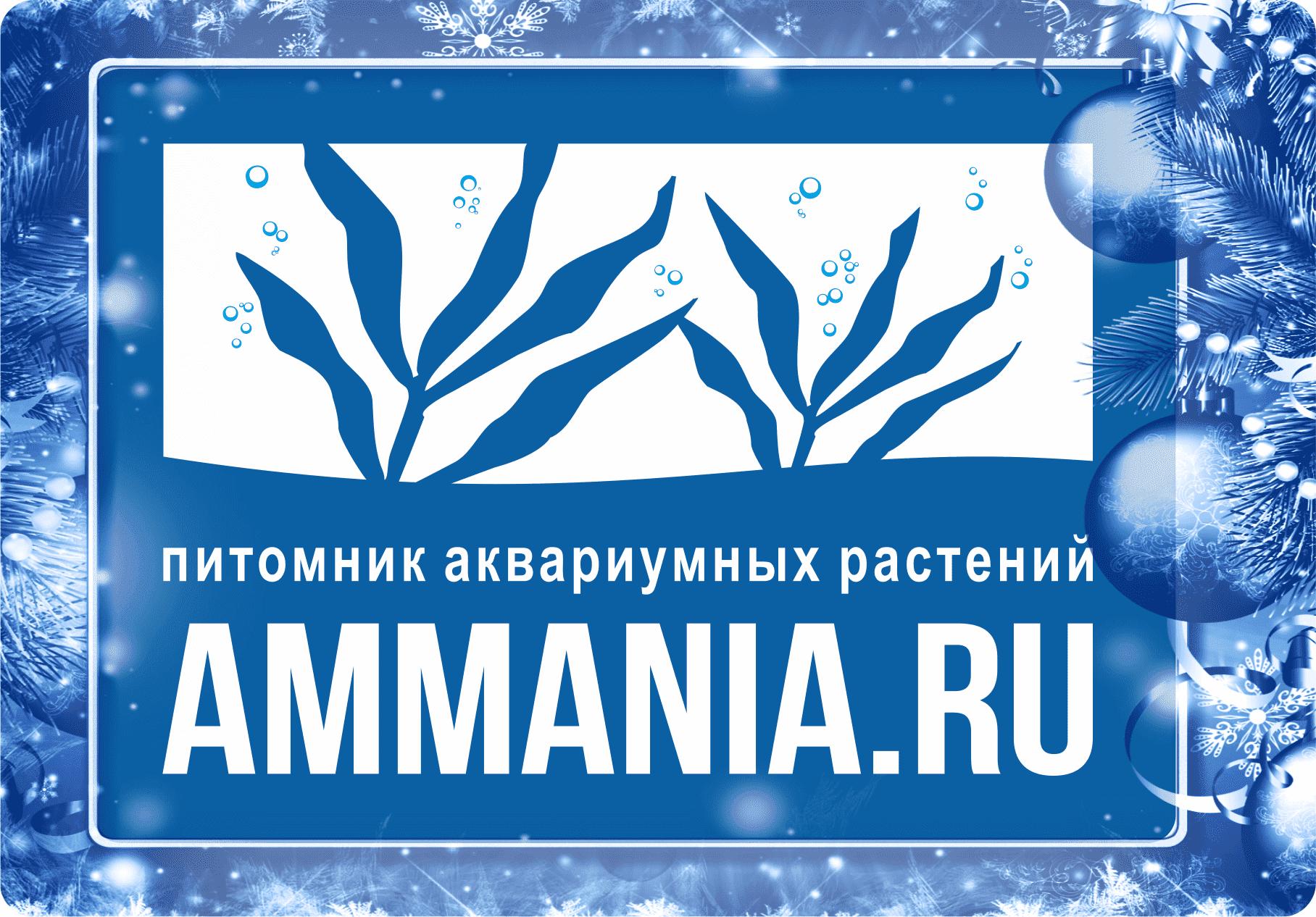 Аммания