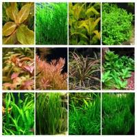 12 видов неприхотливых аквариумных растений!